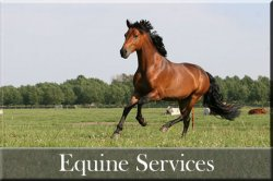 equine_services_button1.jpg